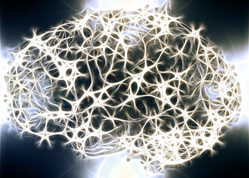 Neurons Brain Structure